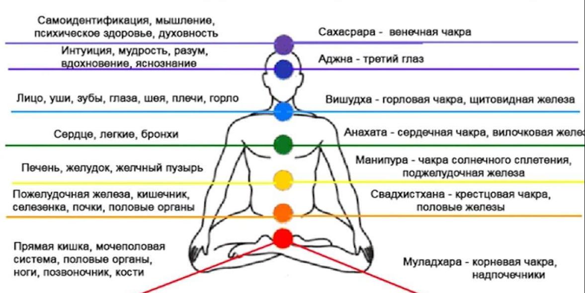 Связь чакр с органами человека